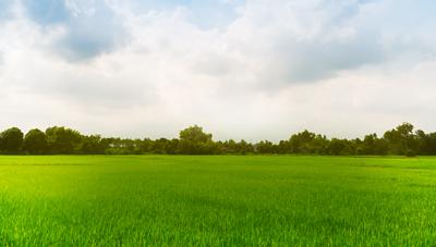 국가중요농업유산 제1호 청산도 구들장논