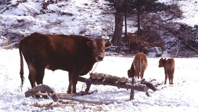 쾌적한 환경에서 가축 겨울나기