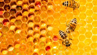 봄철 꿀벌 관리 요령
