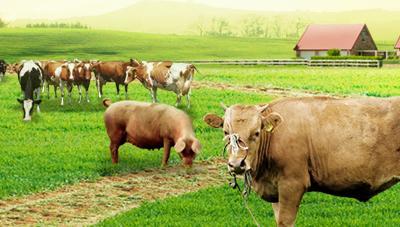 봄철 환절기 가축 관리 요령