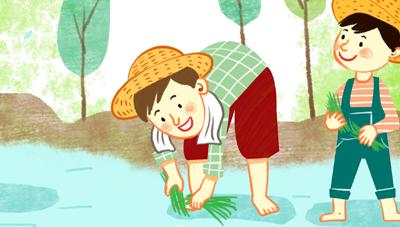 벼 무논점파 재배 성공의 열쇠는 물 관리 기술 실천