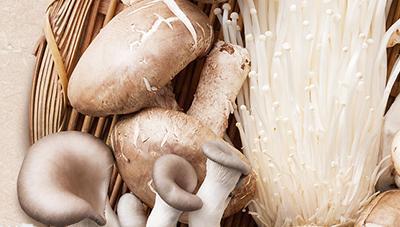 버섯파리 친환경 방제 기술