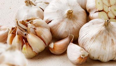 마늘 품질향상을 위한 수확 및 저장기술