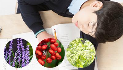 약초로 만든 식단으로 수험생 건강 챙기세요 - 여러분의 합격을 기원합니다!