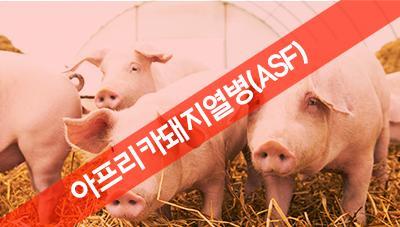 치사율 높은 아프리카돼지열병(ASF) 예방 및 긴급 대응 수칙