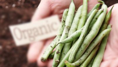 소비자 맞춤형 품질표시 확대 「농산물 표준규격」이렇게 달라진다.