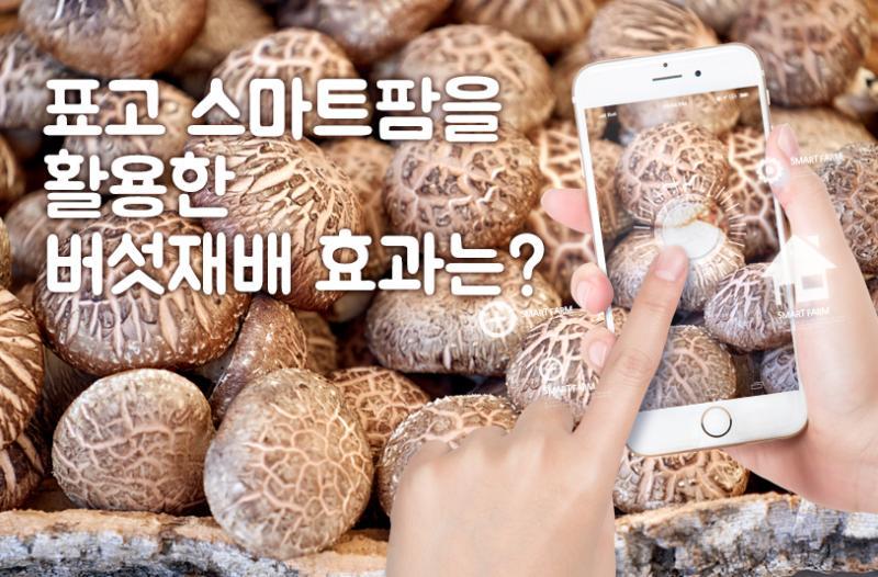 표고 스마트팜을 활용한 버섯재배 효과는?
