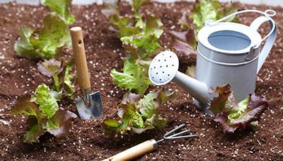 추위 잘 견디는'잎채소'로 겨울 식단 풍성하게