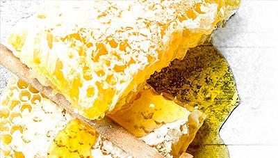 자연이 주는 신비의 천연항생물질 프로폴리스의 생산과 이용