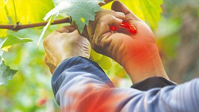 2020년 농업인 업무상 질병 조사 결과