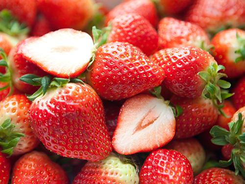 국산 딸기 수출검역 적극 지원