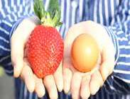 아리향-달걀과 크기 비교