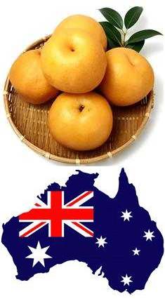 국산 배 호주 수출 가능 지역(진주) 추가, 올해도 수출 가능